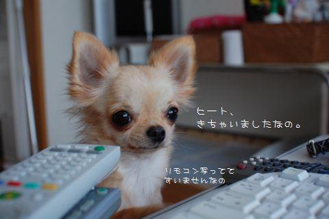052_20081104194059.jpg