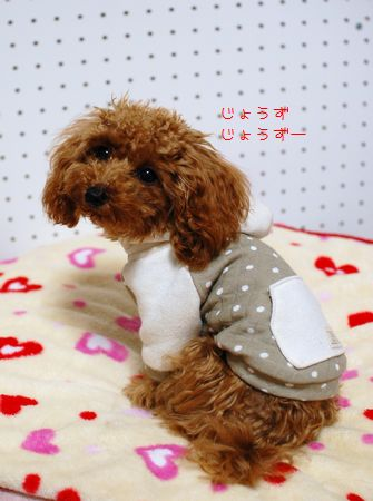 081_20081211191441.jpg