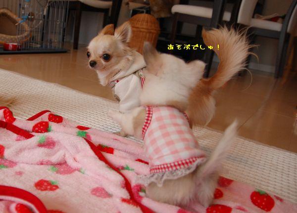 104_20090131210547.jpg