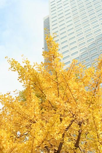 20081117_3.jpg