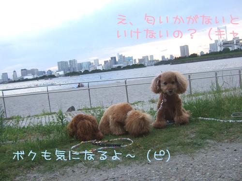20090727_6.jpg