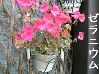 ミニポーチの春の花1