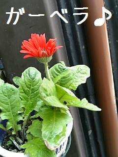 ミニポーチの春の花3