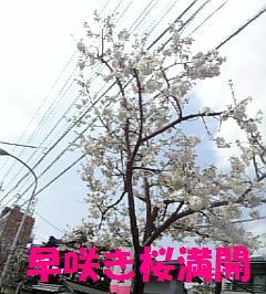 桜07.3.29_2