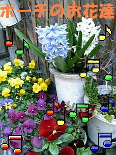 ポーチの花