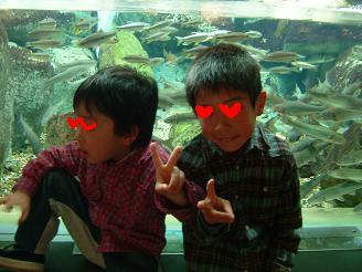 淡水魚水族館5