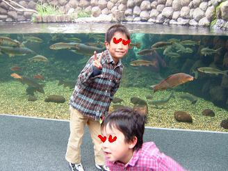 淡水魚水族館6
