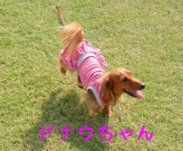 ドナちゃんと散歩1