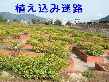 ドナちゃんと散歩2