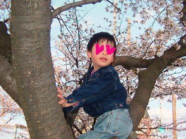 桜2008_2