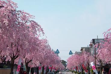 春のお祭り2008_1
