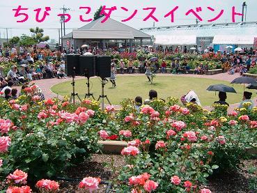 バラ祭り2