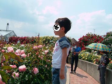 バラ祭り4