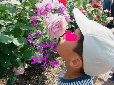 バラ祭り5