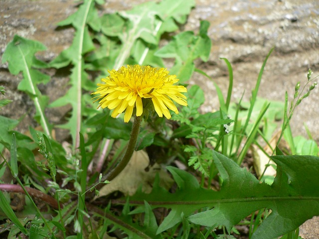 じゅん菜池の花 -1-