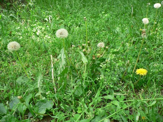 じゅん菜池の花 -2-