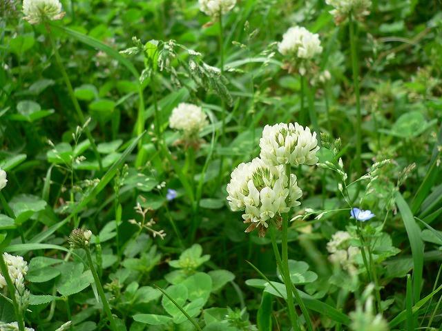 じゅん菜池の花 -4-