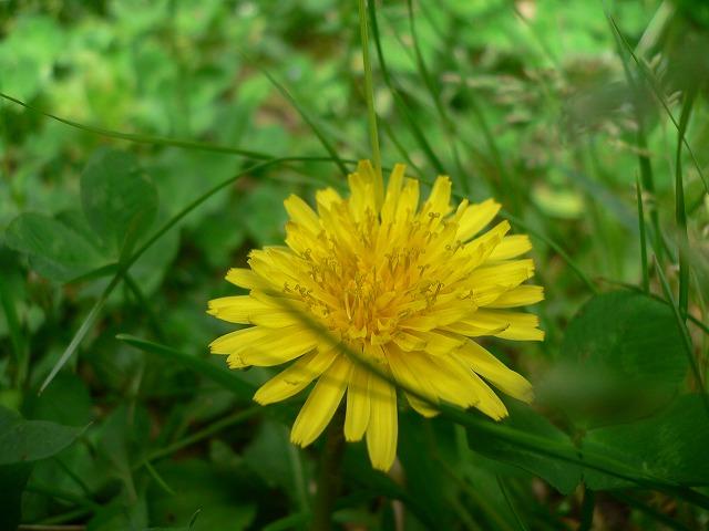 じゅん菜池の花 -6-