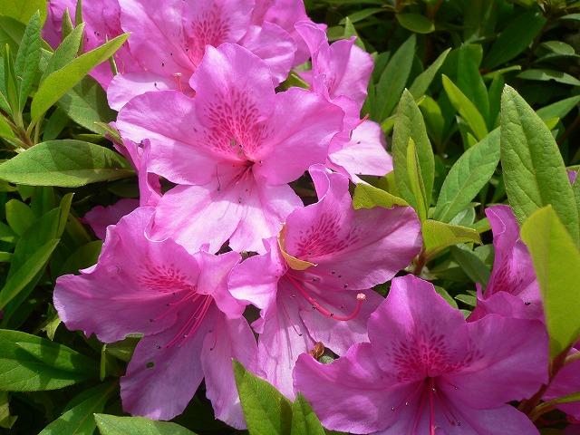 じゅん菜池の花 -7-