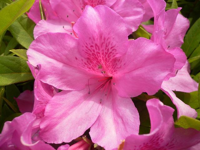 じゅん菜池の花 -8-
