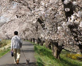 一目千本桜8
