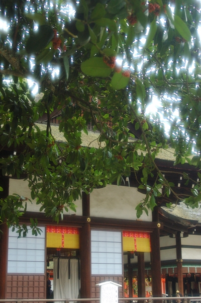 下鴨神社 秋の特別拝観8