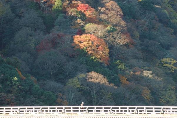 嵐山の残り紅葉 1