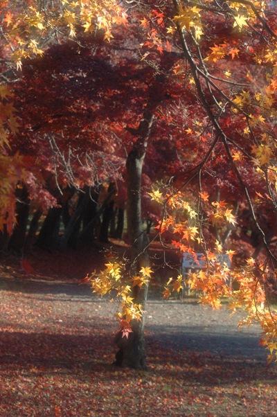 大沢池の散り紅葉 1
