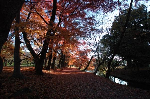 大沢池の散り紅葉2