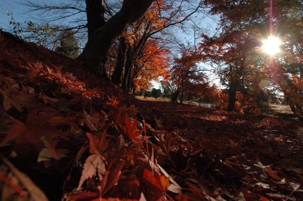 大沢池の散り紅葉4