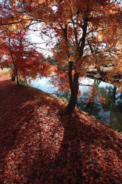 大沢池の散り紅葉5