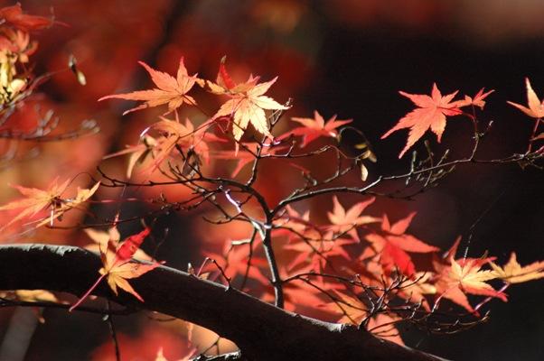 大沢池の散り紅葉6