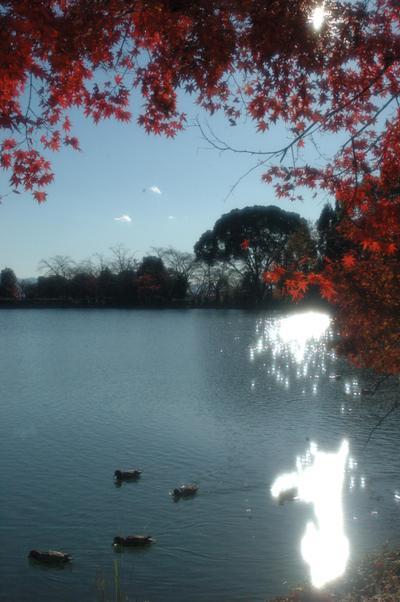 大沢池の散り紅葉7