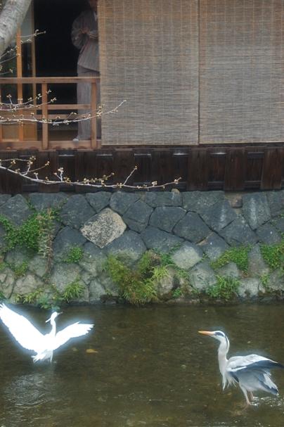 .祇園白川1