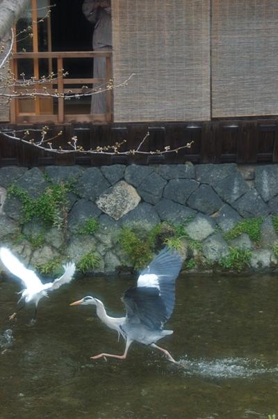 .祇園白川2