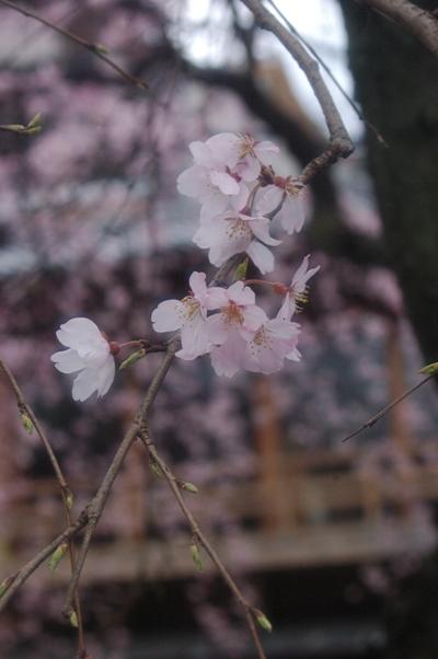.祇園白川3