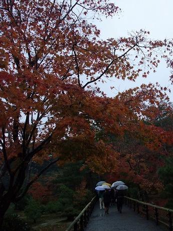 2008-11-24-19.jpg