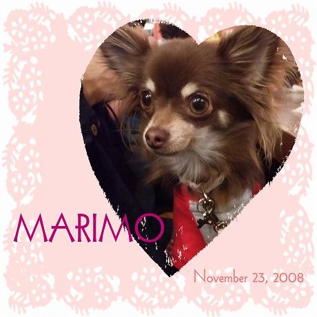 2008-11-24-38.jpg