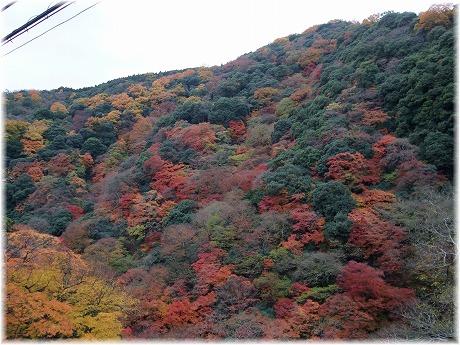 2008-11-30-12.jpg