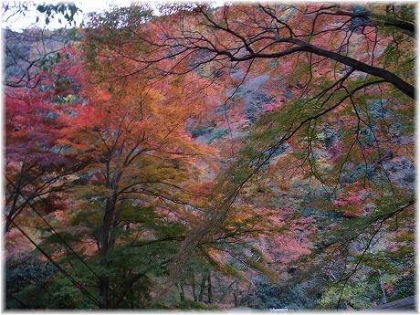 2008-11-30-15.jpg