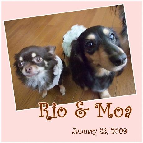 2009-01-22-11.jpg