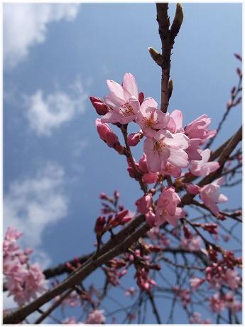 2009-03-29-13.jpg