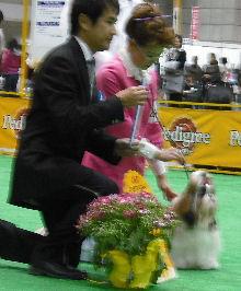20090405-1.jpg