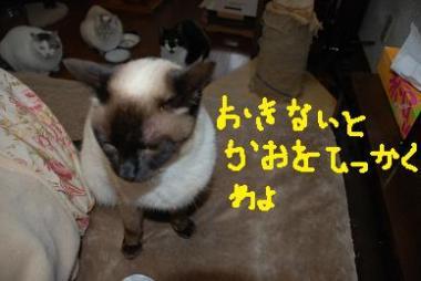 DSC_0068_20090405212156.jpg