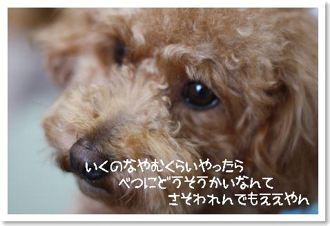 IMG_2261.jpg