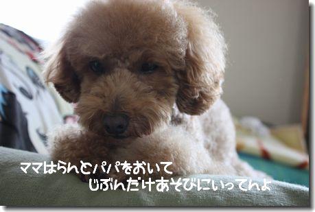 IMG_2705-1.jpg