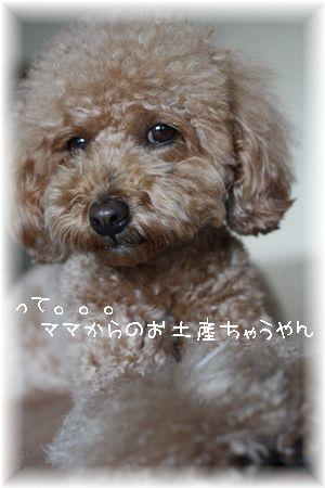 IMG_4545-1.jpg