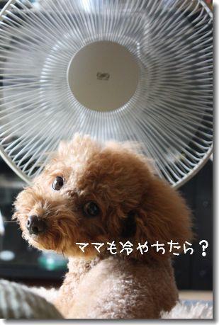 IMG_6595-1.jpg