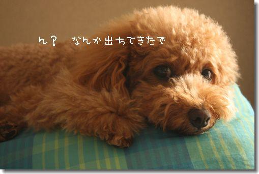 IMG_6604-1.jpg