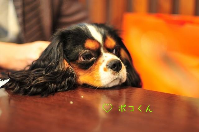 2008.11.8(えにわんキャバ会) 103